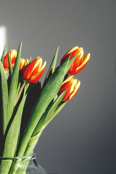 Close-up bouquet of spring red-yellow tulips in a glass vase. Bright sunlight, harsh shadows. Vertical orientation. Copy space