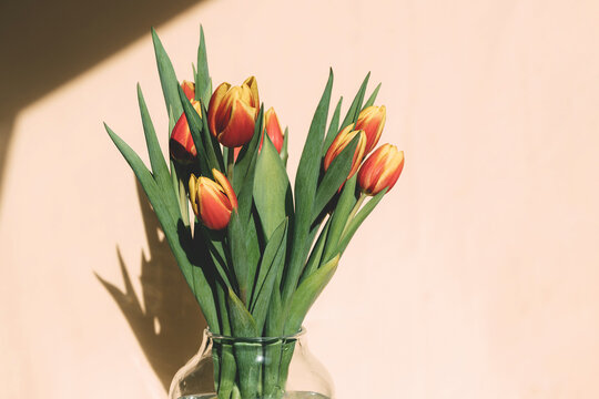 Close-up bouquet of spring blooming red-yellow tulips in a glass vase. Bright sunlight, harsh shadows. Copy space