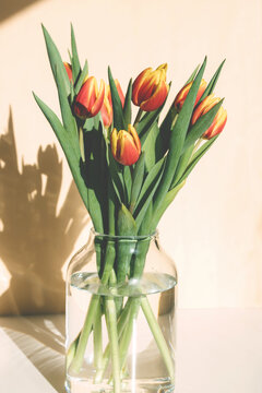 Close-up of a bouquet of spring red-yellow tulips in a glass vase on the table. Bright sunlight, harsh shadows. Vertical orientation. floristry.
