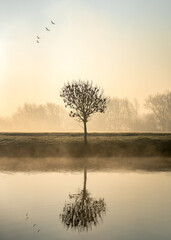 Single lone tree at dawn sunrise standing on river bank with mist and fog rising from canal birds flying above reflected in calm still water foggy misty forest in landscape background.