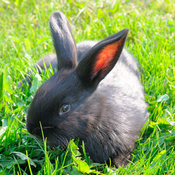 rabbit are running on the green lawn