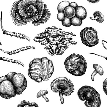 Medicinal mushroom background. Hand sketched adaptogenic plants seamless pattern. Perfect for recipe, menu, label, packaging. Hand sketched mushroom outlines.