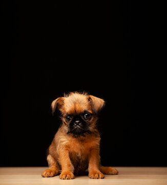 image of dog dark background