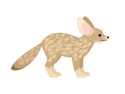 Cute little fox. Cartoon fennec fox, beautiful foxy animal of desert, vector illustration of furry exotic predator isolated on white background