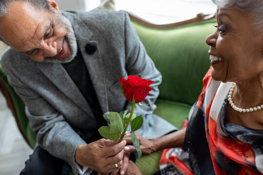 Senior African American man gives rose to wife, to commemorate thier enduring  love and anniversary