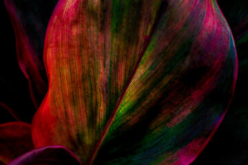 Wall Mural - abstract background, closeup colorful  leaves texture