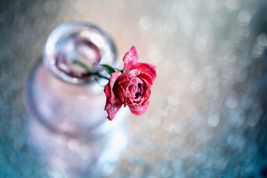 A dry rose in a glass vase on a beautiful bokeh background. Top view.