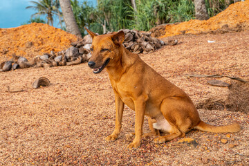 Fototapeta Brązowy dziki pies na tle palm i nieba. obraz