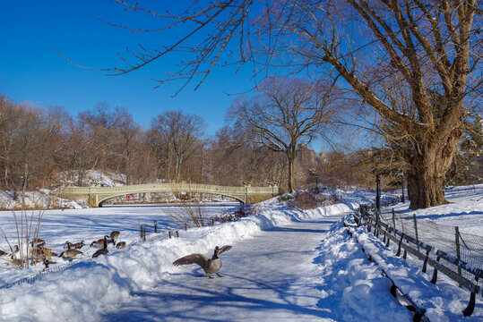 View of Bow bridge during winter, Central Park New York City . USA