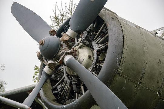 Wrak starego samolotu stojący w zaroślach