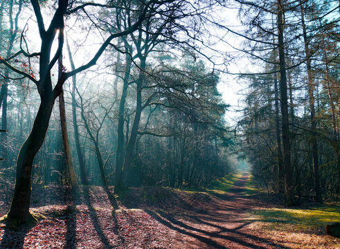 Sunbeams and shadows in a foggy wood with deciduous and needle trees. The path is covered with a layer of dead leaves.