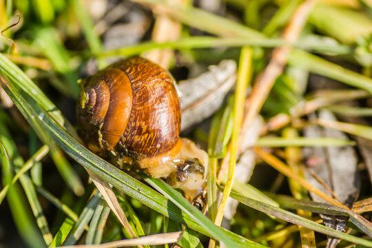 River snail shells on wet grass