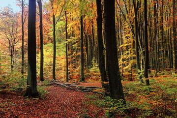 Fototapeta jesień w lesie na Warmii w północno-wschodniej Polsce