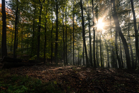 Sunlight shining through the leaves of a deciduous forest