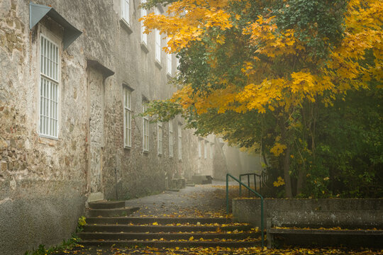 Stairs and path near an old big house house in a deciduous forest in autumn