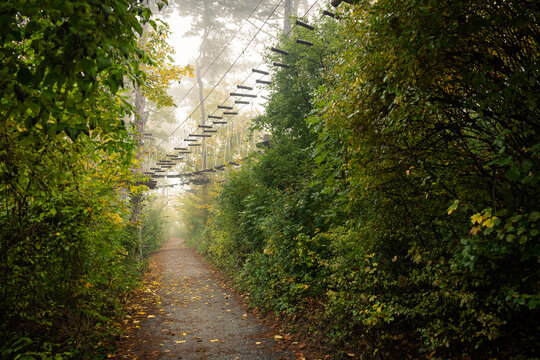 Small road in a deciduous forest in autumn