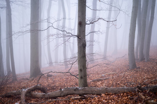 A deciduous forest on a foggy day in winter