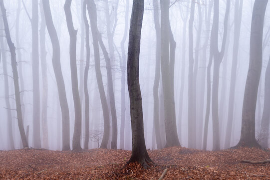 Abstract motion blur of a forest in winter
