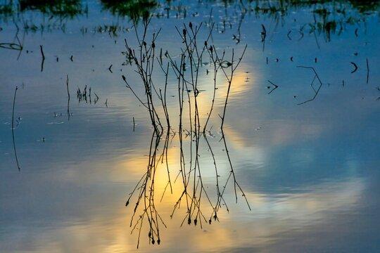 Unkrautpflanze spiegelt sich im Sonnenuntergang in einer Pfütze.