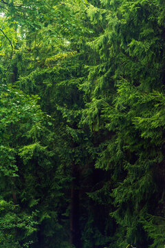 Lush green foliage in summer forest.