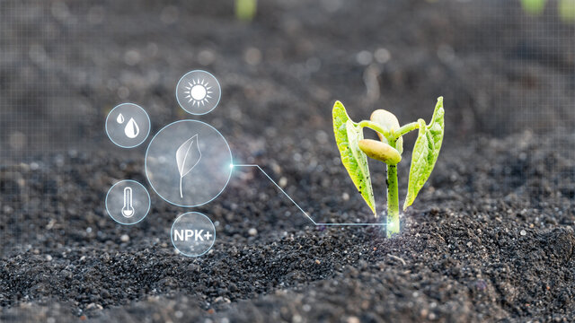 Modern and smart agriculture 4.0, young sprout plant grow on field with technological farming and display cyber icons. Monitoring the growth of plants. Innovation and modern technology.