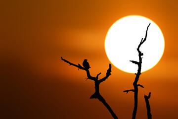 Ptak siedzący na gałęzi drzewa podczas zachodu słońca