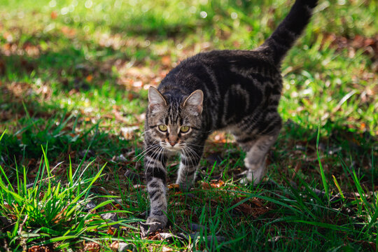 Cat Exploring the Yard Outside