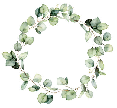 Watercolor wreath of eucalyptus branches, seeds and leaves. Hand painted silver dollar eucalyptus isolated on white background. Floral illustration for design, print, fabric or background.