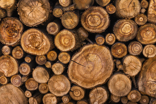 sawn tree trunks stacked in a woodpile