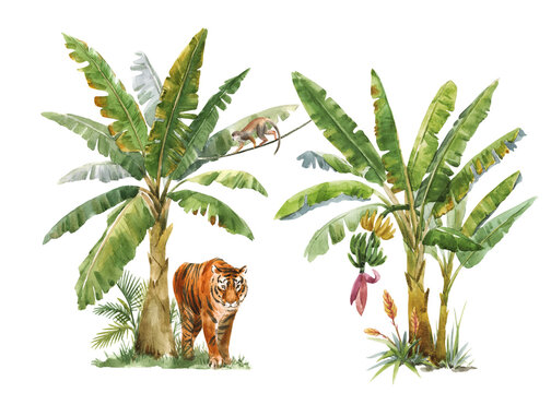 Beautiful image with watercolor tropical palms and jungle animal tiger. Stock illustration.