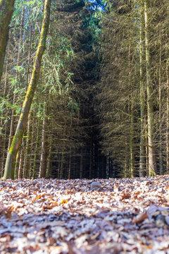 Entrée en forêt ( Liège ,Wallonie ,Belgique )