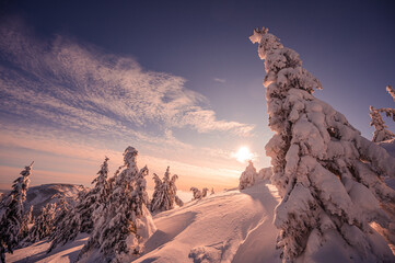 Alpine mountains landscape with white snow and blue sky. Sunset winter in nature. Frosty trees under warm sunlight. Wonderful wintry landscape