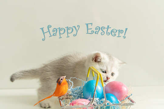 Silver British kitten near the basket with colored eggs.