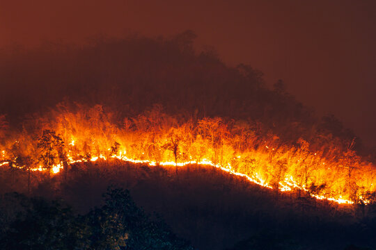 Forest fire on the mountain