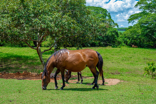 Mare and foal grazing on the farm