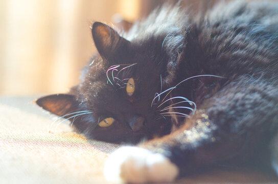Cat face sleeping