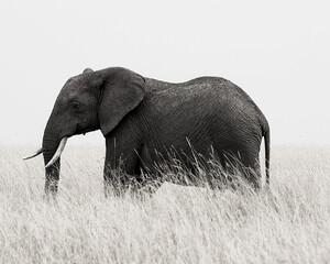 Grayscale shot of an elephant