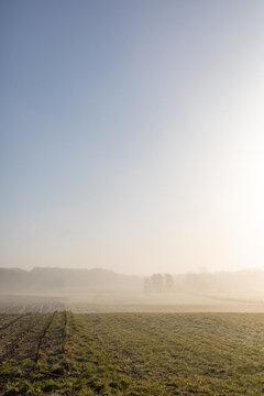 Misty morning scene in winter February