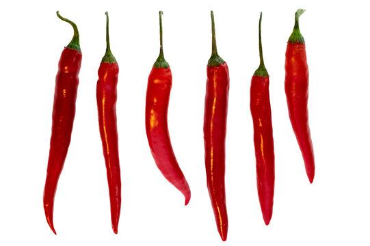 Mehrere Chili in einer Reihe auf weissem Hintergrund