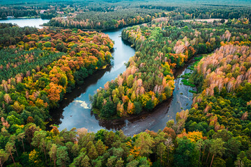 Colorful forest and curvy river in autumn. Aerial view