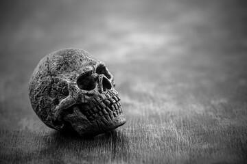 Old skull in black and white