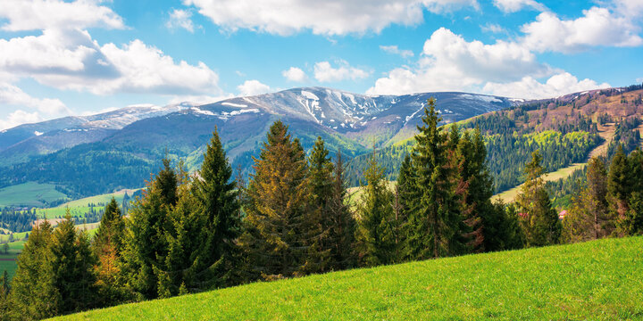 mountain landscape in springtime on a sunny day. trees on the grassy meadow. fluffy clouds above the distant ridge. beautiful scenery of carpathian borzhava ridge