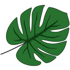 Obraz Zielony liść monstery z wcięciami - fototapety do salonu