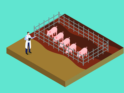 Male veterinarian working at the farm pig. Isometric vector concept