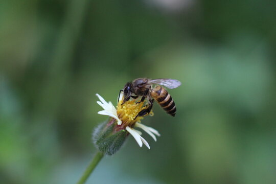 close up of a bee pollination of flower