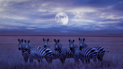 A group of zebras in the African savannah. Night lunar landscape.