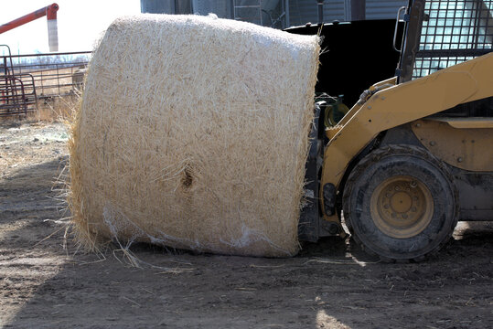 Round hay bale to be moved on a farm.