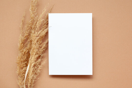 Mockup with empty blank paper and dried pampas grass over pastel beige background. Minimal, stylish concept.