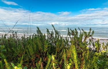 Plaża rośliny brzeg morze