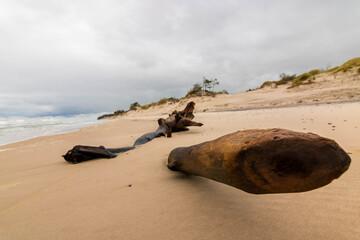 Morze plaża brzeg piasek
